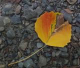 Leaf Caribou Bog  c 7-30-17.jpg
