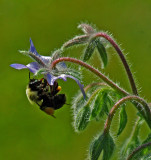 Bee Garden 8-1-17.jpg