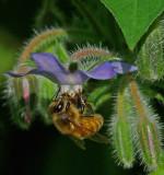 Bee Garden b 8-1-17.jpg