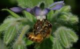 Bee Garden c 8-1-17.jpg