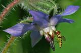 Hoverfly Garden 8-1-17.jpg