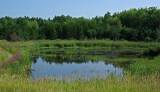 Beaver Pond  City Forest 8-2-17.jpg