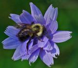Bee  City Forest b 8-2-17.jpg