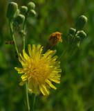 Wildflower City Forest 8-2-17-ed.jpg