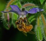 Bee Garden b 8-1-17-ed.jpg