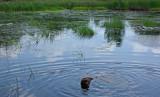 Kelley - Beaver Pond City Forest c  8-4-17.jpg