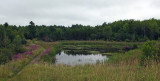 Beaver Pond City Forest 8-12-17.jpg