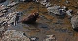 Kelley Mariaville Falls b 8-14-17.jpg