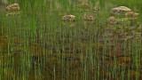 Reeds - Bubble Pond 8-17-13-ed-pf.jpg