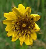 Wildflower  Essex Woods 6-17-17-ed.jpg