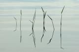 Water Plants Breakneck Ponds b 6-29-12.jpg