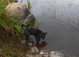 Ollie Beaver Pond  8-18-17.jpg