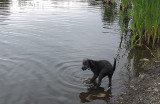 Ollie Beaver Pond b 8-18-17.jpg