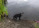 Ollie Beaver Pond c 8-18-17.jpg