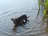 Ollie Beaver Pond 8-21-17.jpg