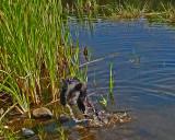 Ollie Beaver Pond b 8-21-17.jpg