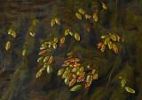 Leaves  Kenduskeag Stream 9-4-17-ed.jpg