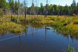 Beaver Pond  Sunkhaze 9-13-17.jpg