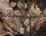 Fungi  Harbor Brook Trail 8-6-17.jpg