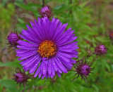 Wildflowers Little River  Trail c  9-15-17.jpg