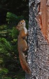 Squirrel Little Long Pond 9-17-17 .jpg