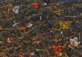 Leaves Partridge  Pond   10-9-14-ed.jpg