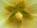 Flower Bangor  8-3-12=pf-ed.jpg