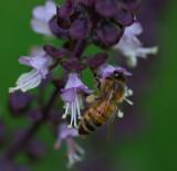 Bee Garden 9-21-17.jpg