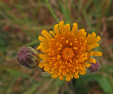 Wildflower  City Forest 9-27-17.jpg