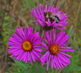 Bee City Forest b 9-27-17.jpg