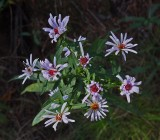 Wildflowers Harbor Brook Trail 10-1-17.jpg