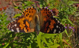 Butterfly City Forest 10-3-17.jpg