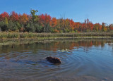 Kelley - Beaver Pond City Forest b 10-3-17.jpg