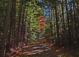 Logan Rd. DeMeritt Forest 10-5-17.jpg