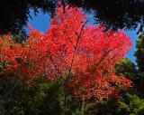 Tree Logan Rd. DeMeritt Forest 10-5-17.jpg
