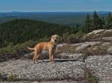 Roxie - Tunk Mountain 9-6-13-ed.jpg