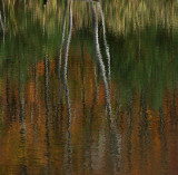 Reflection - Pond  - City Forest 10-11-11-ed.jpg