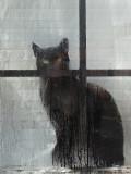 Cat in Window  - Bangor 11-4-12-ed.jpg