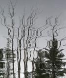 Reflection - Walden c 11-10-11.jpg