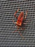 Stink Bug on screen 10-9-17.jpg