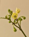 Tovari Flowers  9-4-17.jpg