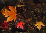 Leaves Sebasticook Lake 10-10-17.jpg