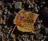 Leaf Newport Rail Trail b 10-10-17.jpg