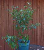 Tall Tepe Plant  10-12-17.jpg