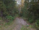Kelley - Kenduskeag SM Trail 10-14-17.jpg