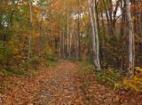 Kenduskeag SM Trail  c 10-14-17.jpg