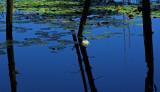 Reflection - Fresh Pond - Holbrook 8-30-11-edJPG.jpg