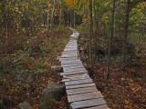 Trail Caribou Bog c 10-16-17.jpg