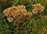 Weeds Caribou Bog 10-16-17.jpg