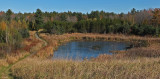 Beaver Pond City Forest 10-18-17.jpg